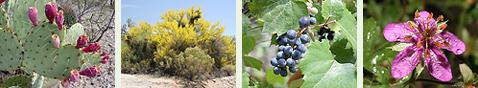 Arizona Wild Plants