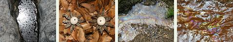 Other Arizona Organisms