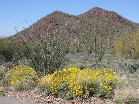 Arizona Upland Sonoran Desertscrub in Saguaro National Park