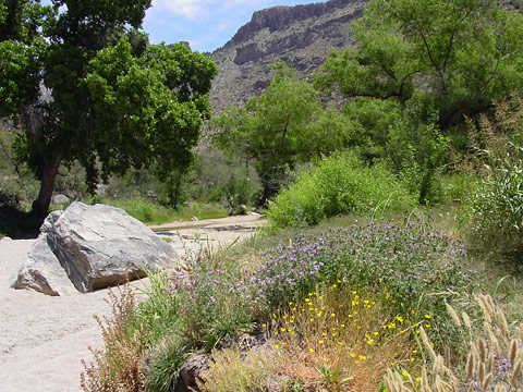 Riparian area in Sabino Canyon