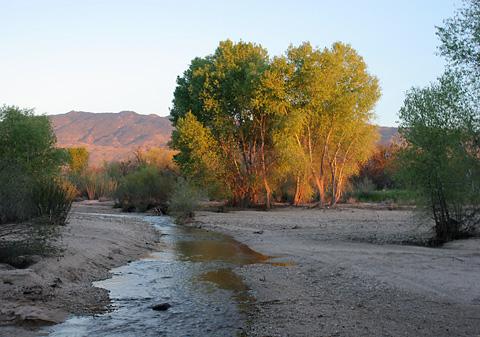 Sunset in Tanque Verde Wash in Tucson, Arizona