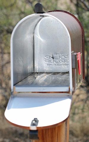 Immature female Black Widow Spider (Latrodectus sp.) in a mailbox