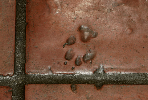 Canine footprint in Saltillo tile