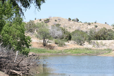 Cow pond on Bellota Ranch near Tucson, Arizona