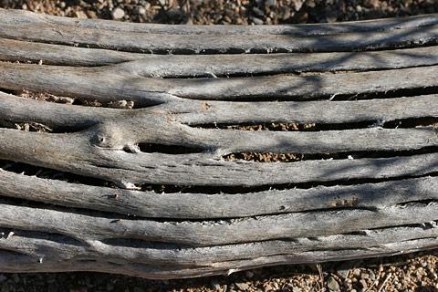 Saguaro (Carnegiea gigantea) ribs