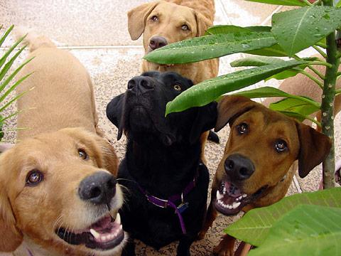 Golden Retriever, Labrador Retriever, Chesapeake Bay Retriever, and a Doberman mix