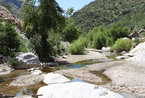 Sabino Canyon near Tucson, Arizona
