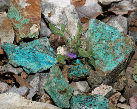 Secondary copper minerals from Helvetia, Arizona