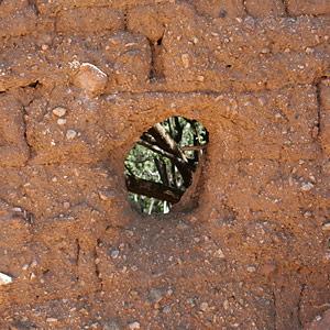 Melting adobe bricks in Helvetia, Arizona