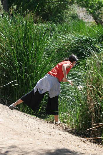 Collecting mosquito larvae in the Sweetwater Wetlands in Tucson, AZ