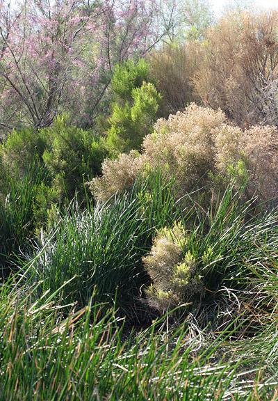 Sweetwater Wetlands in Tucson, AZ