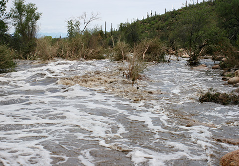 Flooding in Sabino Canyon on July 29, 2006