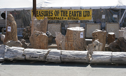 Petrified trees and tree stumps from Indonesia