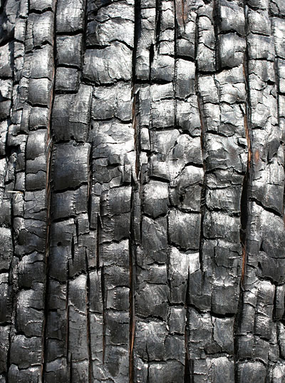 Burned and blackened tree bark