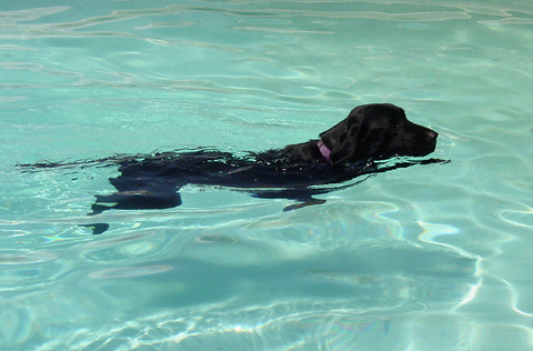 Sammy, my swimming dog
