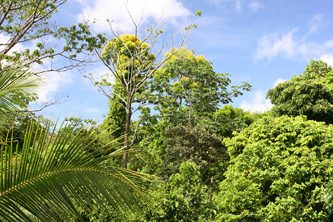 Jungle canopy in Costa Rica