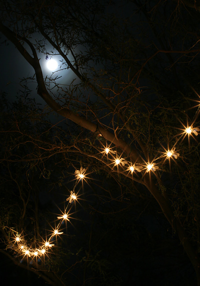 A full moon and a string of dragonfly lights in a tree