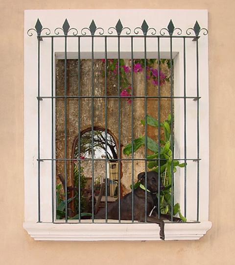 Dog behind window bars in Alamos, Sonora, Mexico