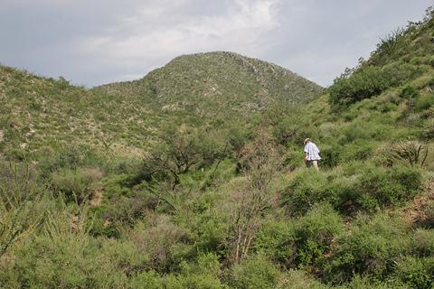 Along Forest Route 183 in Arizona's Santa Rita Mountains
