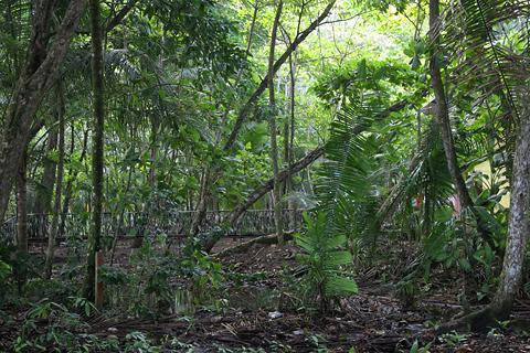 Coastal jungle in Manuel Antonio, Costa Rica