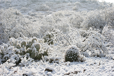 Snow in Tucson, Arizona, January 22, 2007