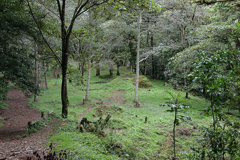 Trail through a clearing near San Gerardo de Dota, Costa Rica