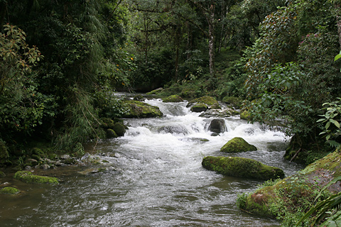 Savegre River (Rio Savegre) in San Gerardo de Dota, Costa Rica