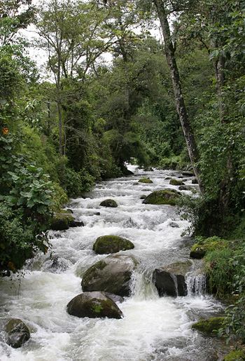 Savegre River near San Gerardo de Dota, Costa Rica