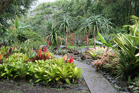 Bromeliad garden at Xandari Resort & Spa, Alajuela, Costa Rica