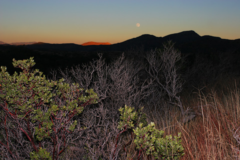 Moonrise over the chaparral east of the Rincon Mountains, Arizona