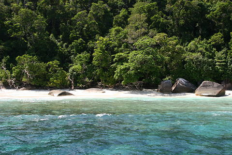 Beach and coastal forest in Mu Ko Similan National Park in the Similan Islands of Thailand